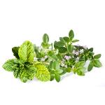 /assets/img/urbigo/plant_collections/aroma_duo.jpg