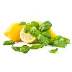 /assets/img/urbigo/plant_collections/lemon_basil.jpg
