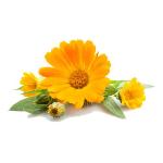 /assets/img/urbigo/plant_collections/pot_marigold.jpg