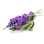 provence-lavender