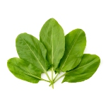 /assets/img/urbigo/plant_collections/sorrel_plant.jpg
