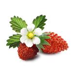 /assets/img/urbigo/plant_collections/strawberry.jpg