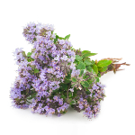 /assets/img/urbigo/plant_collections/thyme.jpg